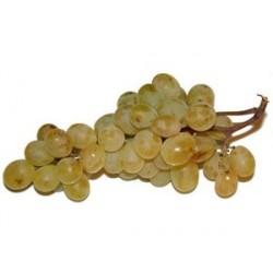 Uva Moscatel