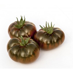 Tomate Ibérico Kg